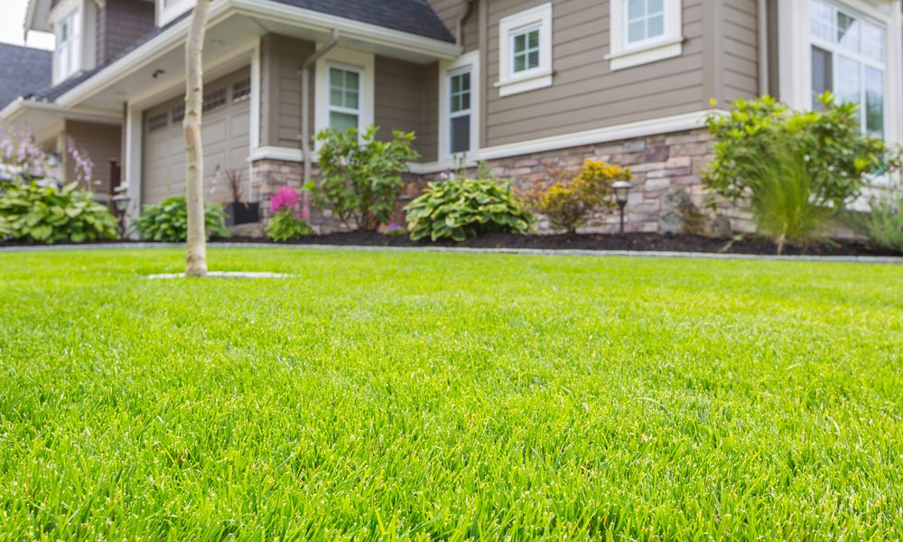 Perfectly manicured front lawn