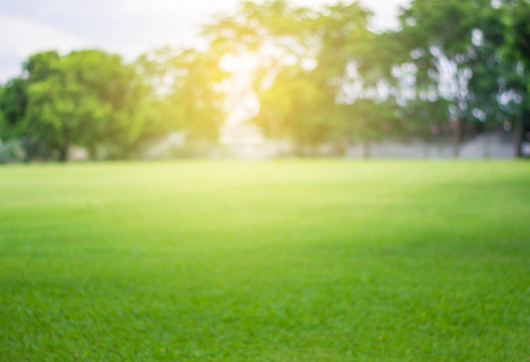 Green SYNLawn Carolina lawn