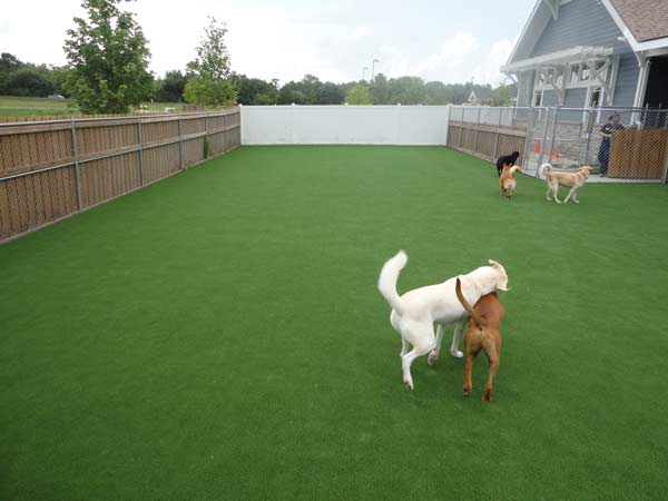 pet and dog turf