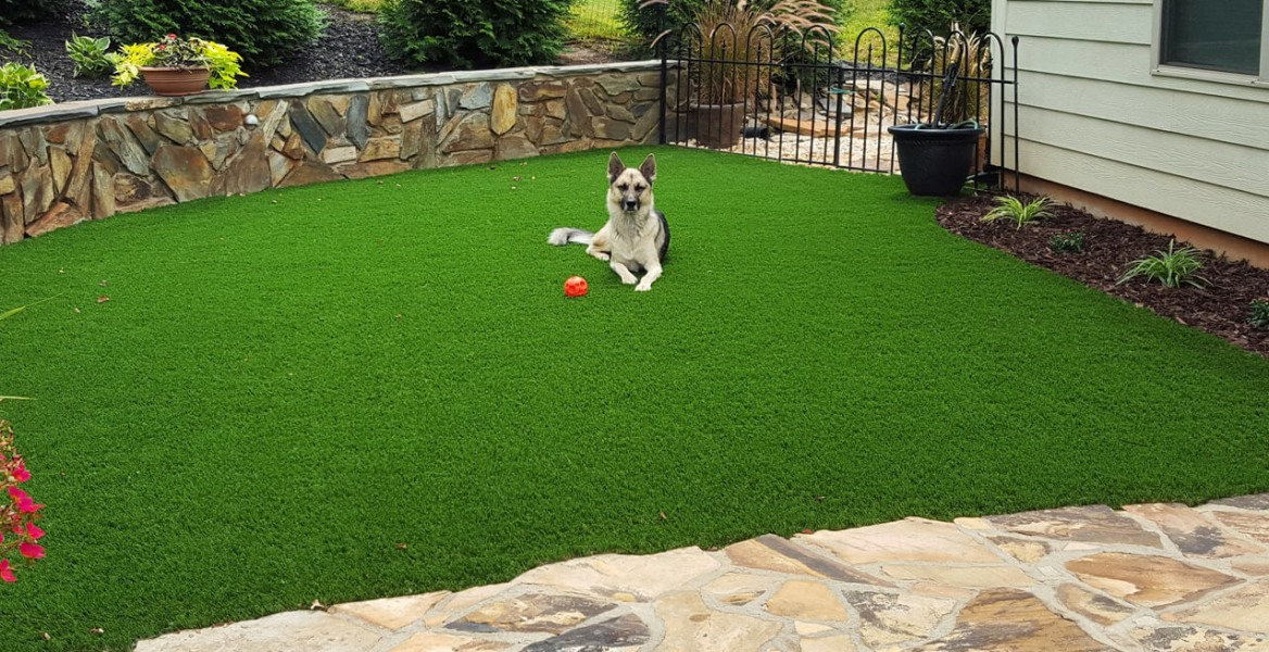 What To Include In Your Diy Dog Run
