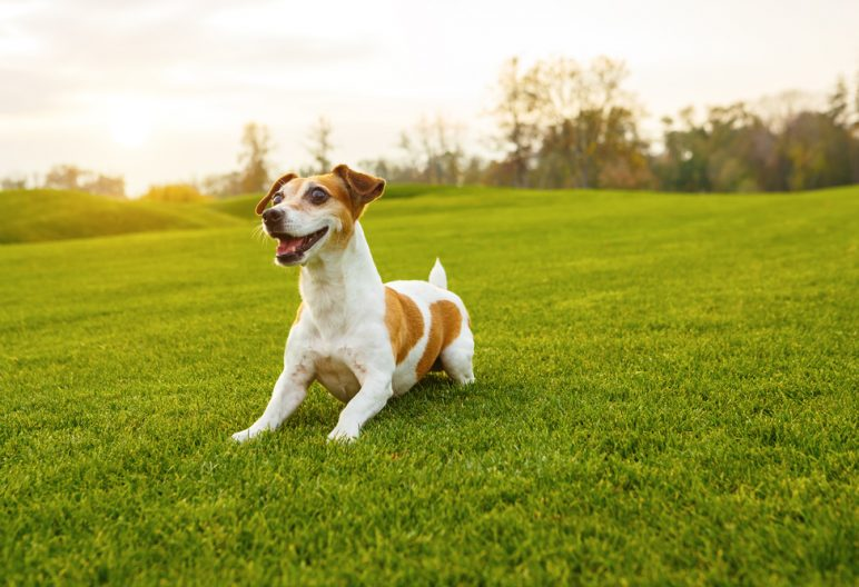 Dog playing on grass