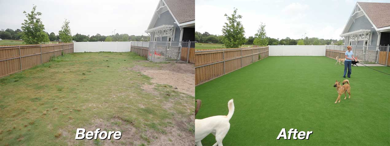 dog-grass-before-after