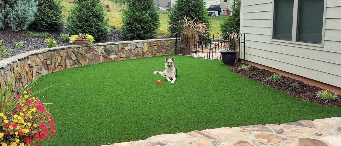 dog-grass-hero